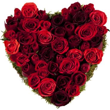 coeur-de-roses-rouges-au-nom-de-la-rose-10860783vjehu_2041