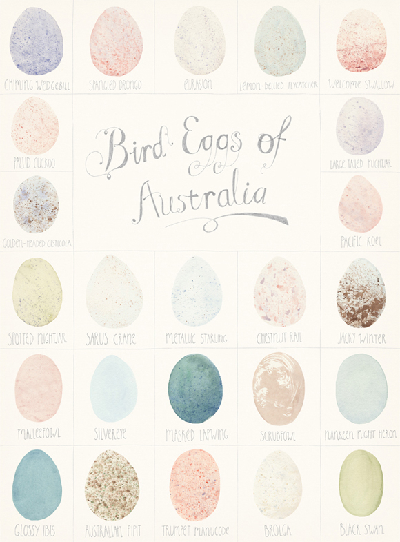 amy_borrell_bird_eggs1
