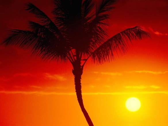 51559_papel-de-parede-calor-do-verao-maui-havai_1024x768